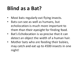Echolocation For The Blind Echolocation