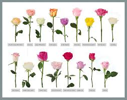All Types Of Flowers List - 100 types of flowers images flowers 200 different types of