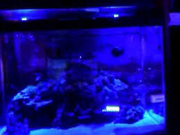 pep boys led lights diy aquarium led moonlights for under 20 youtube