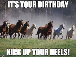 Horse Birthday Meme - fancy horse birthday meme kayak wallpaper