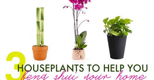 3 houseplants to help you feng shui your home for spring
