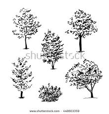 photos tree sketches black and white drawing art gallery