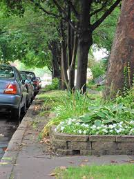 planting bed around your tree might be killing it chicago tribune