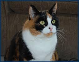 Diabetes Cat Meme - diabetes blog about kerri morrone sparling