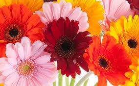 flower shops in tulsa catoosa flowers florist in catoosa ok flower shop catoosa