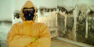 mold removal certified priority restoration 1800 974 2807