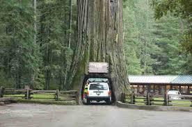 Chandelier Tree Address Pacific Coast Highway Road Trip Planner Best Stops From San