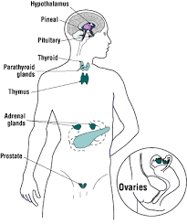 endocrine disruptors osh answers