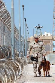 belgian shepherd us army partners in the desert u003e u s air force u003e article display