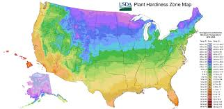 Garden Zone Map California - peony care tree herbaceous intersectional