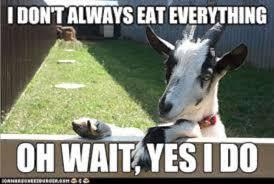 Meme Eat - funny goat memes eat everything w630