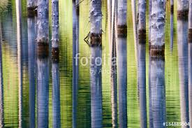 the sunken forest of lake kaindy lake kaindy meaning the birch