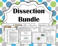 basic biology earthworm dissection lab activity biology