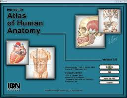 Netter Atlas Of Human Anatomy Pdf Download более 20 лучших идей на тему Atlas De Anatomia Netter на Pinterest