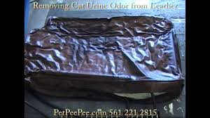 Leather Sofa Stain Remover by Removing Cat Urine Odor From Leather Downy Pillow Youtube