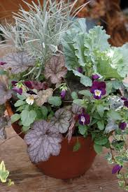 native tennessee plants festive fall and winter containers state by state gardening web