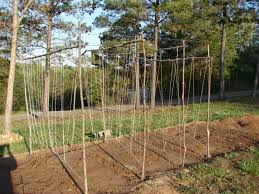 Garden Trellis Design Garden Trellis Ideas For Vines House Exterior And Interior