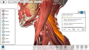 essential anatomy 3 apk buy essential anatomy 3 microsoft store
