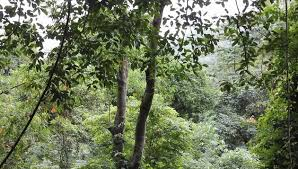 Plants In The Tropical Rain Forest - tropical rainforest biome location climate temperature