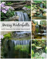 waterfalls the perfect abode for moss aquascape inc