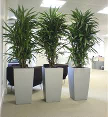 plants that need no sunlight office plants that require no