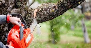 simo brothers tree trimming and removal lake bluff il