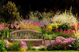 landscaping with native plants in the garden front and center