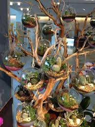 best 25 hanging terrarium ideas on pinterest hanging plants