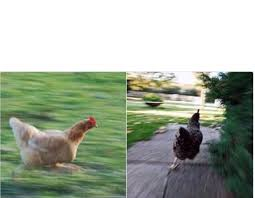Chicken Running Meme - chickens running blank template imgflip