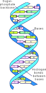 an introduction to recombinant dna