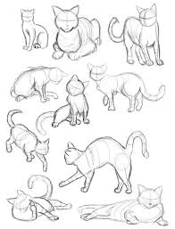 134 best cat images on pinterest cats cute cat drawing and comics