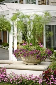 633 best ornamental grasses and other and or bushy plants and