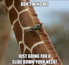 Meme Giraffe - trust me giraffe your neck is a slide by ienjupiter meme center