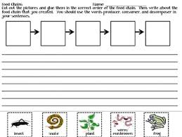 science food chains lessons tes teach
