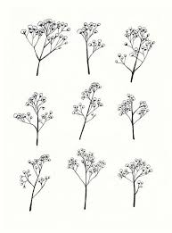 babys breath gypsophila baby s breath flower illustration a4 print of