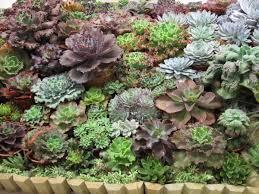 Brisbane Botanic Gardens Mount Coot Tha by 2009 Annual Cactus And Succulent Show U2013 Juiced Pixels