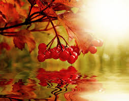 Autumn Colors Autumn Images Public Domain Pictures Page 1