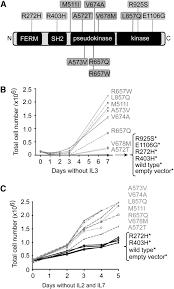 jak3 mutants transform hematopoietic cells through jak1 activation