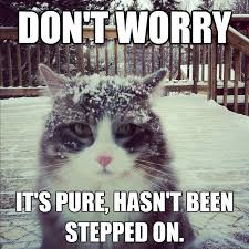 Cat Cocaine Meme - don t worry it s pure hasn t been stepped on cocaine cat quickmeme