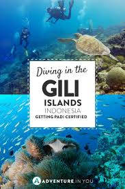 best 25 padi certification ideas on pinterest scuba diving