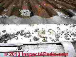 How To Remove Lichen From Patio Lichens Damage On Roofing Surfaces