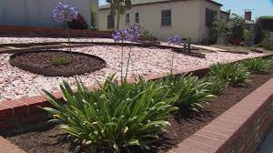 landscaping with native plants californians plant drought friendly landscapes video small