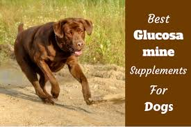 best glucosamine for dogs a supplement to ease joint pain
