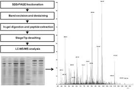 sample preparation for proteomic analysis using a gelc ms ms