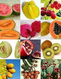 edibles fruits fruits mix sweet edible plant tree fragrant tropical fruit