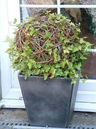Topiary Balls With Flowers - 75 best ivy projects images on pinterest plants flowers and