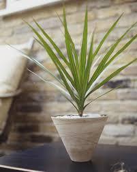 low light houseplants plants that don t require much light low light houseplants plants that dont require much light beautiful