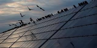 si e social d edf filière solaire les professionnels redoutent l hégémonie d edf
