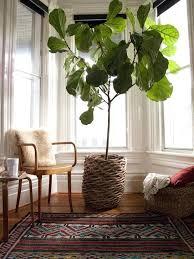 floor plants home decor plants for home decor view in gallery floor plants home decor