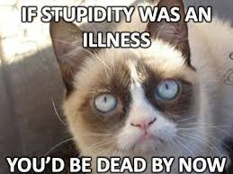 Hehe Meme - which grumpy cat are you grumpy cat quotes cat jokes and